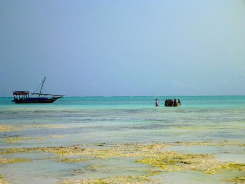 Zanzibar Flats