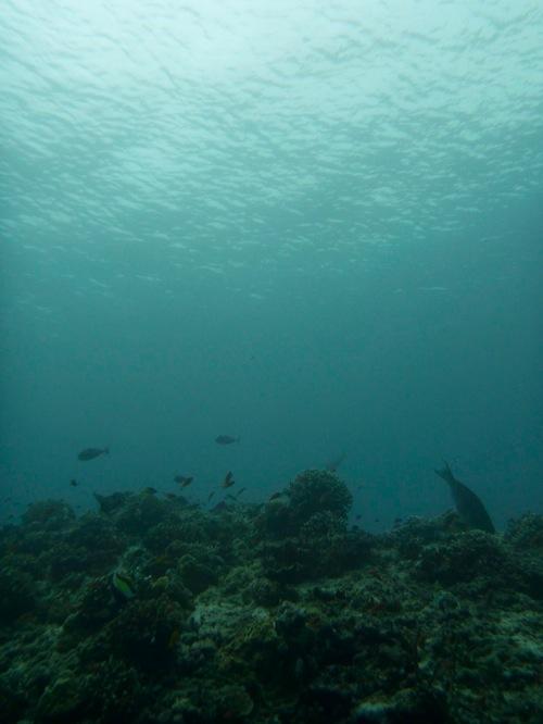 Indonesia 0029