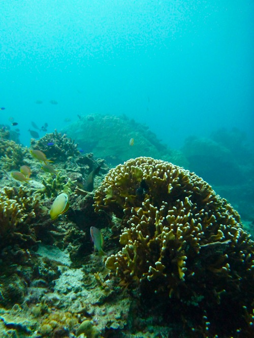 Indonesia 0038